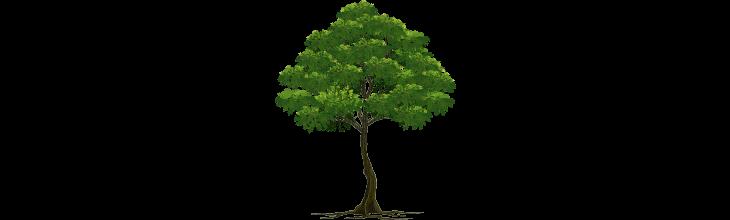 Hangi Ağaçsın?